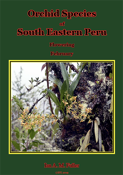 Orchid book 2 (Flowering species - February). image